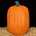 Boss Artificial Carvable Pumpkin